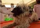 Vacunación contra la rabia canina y felina inicia con 35 puntos de inmunización.