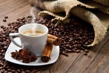 VIDEO – Au Mexique, la production de café est elle en péril ?
