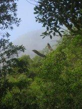 Fog's clearing