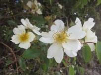 De las escasas flores que me encontré por el camino