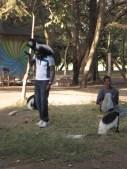 Jugando con monos colobos