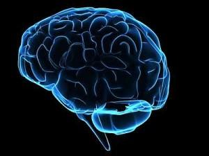 cervello-300×225
