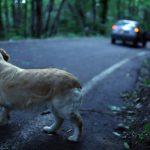 ATA e Comune insieme contro l'abbandono degli animali