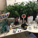 Cannabis fai da te, coppia nei guai