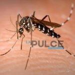 Emergenza zanzare, inutile se fatto a macchia di leopardo