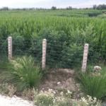 Le coltivazioni di cannabis legali e illegali in Piemonte: cosa dice la legge italiana