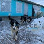 Scoperto un canile abusivo, trenta cani sequestrati