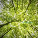 Acqui Terme pianta alberi, l'idea dei 5 Stelle