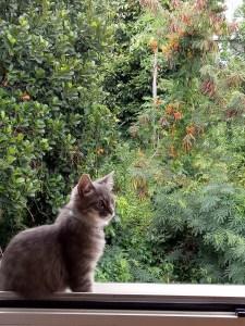 chat, pet, cat, kitten, phobie, peur
