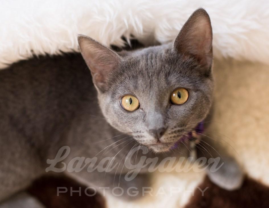 Olivia's+eyes