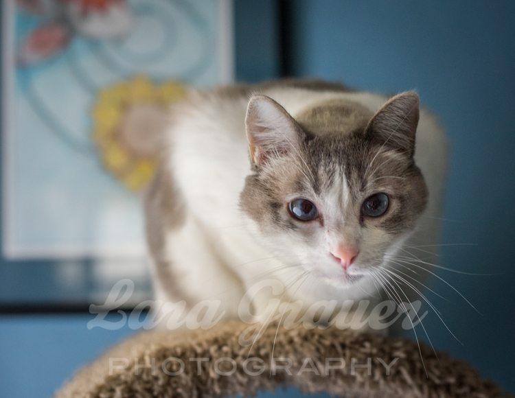 crouching+kitty