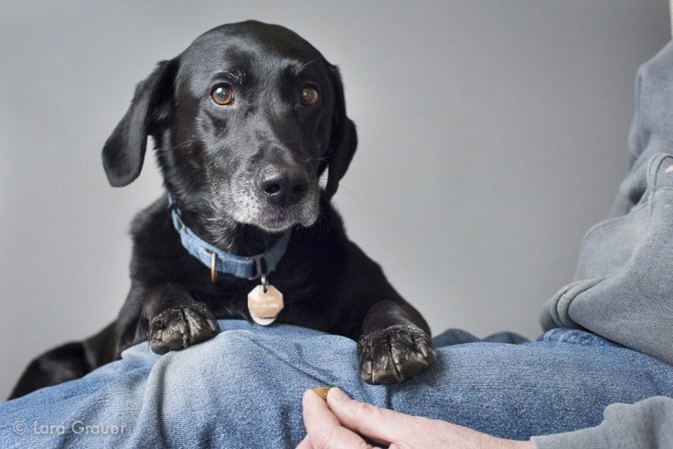 big+black+lap+dog