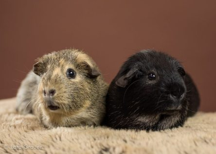 two+piggies