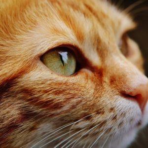Cat-1455468_1920-768×510