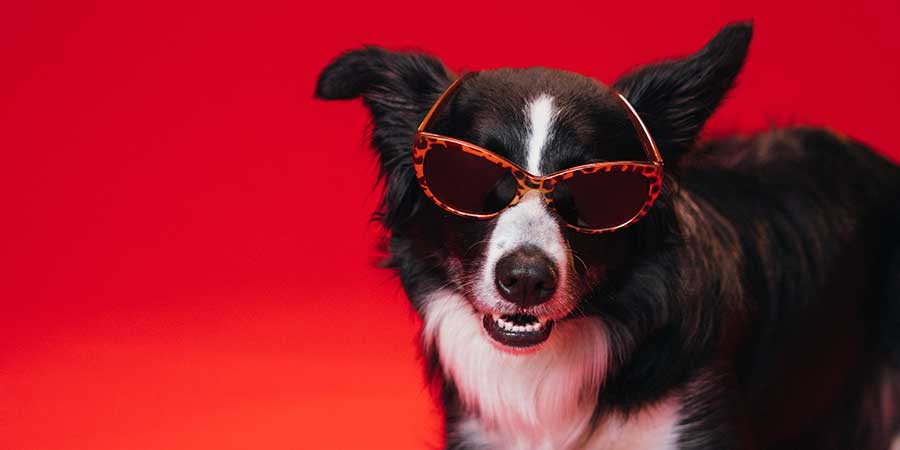 Black and white dog wearing red glasses