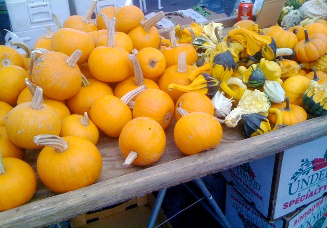Mini Pumpkins and Squashes at Larchmont Farmers Market