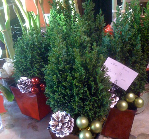 Mini Christmas Tree at Larchmont Village Florist