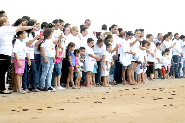 Liberan crías de tortuga lora en playa Tesoro