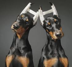 Prohíben mutilar la cola y orejas de las mascotas