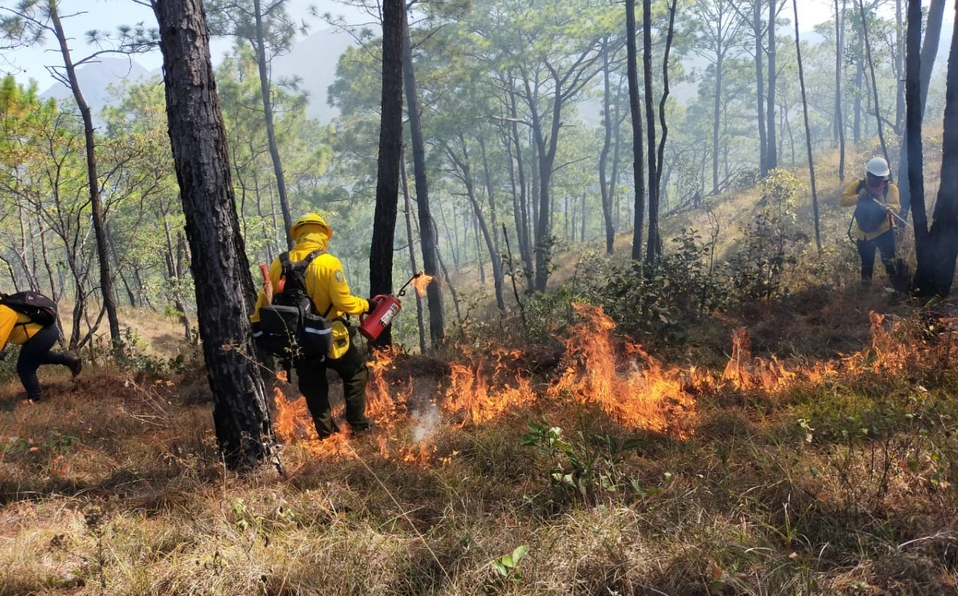 Mantienen reforestación en áreas dañadas por incendios