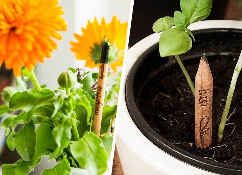 Il s'appelle Sprout et ce crayon donne vie à une plante