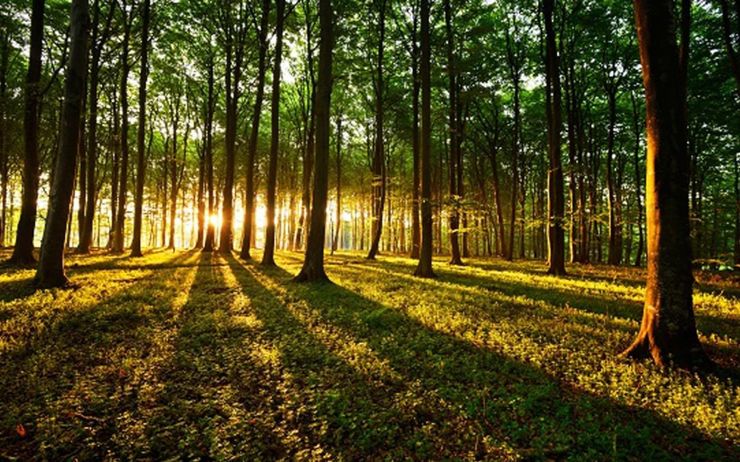 Les arbres communiquent entre eux et partagent leurs ressources alimentaires