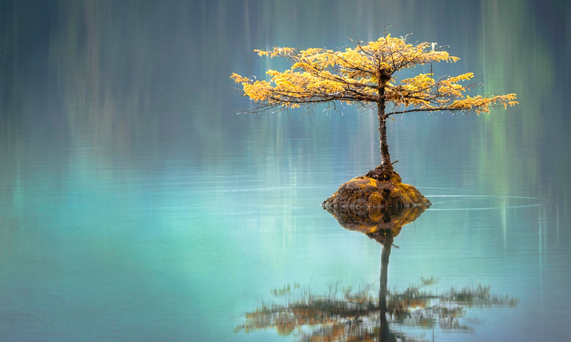 Small tree reflected in water.