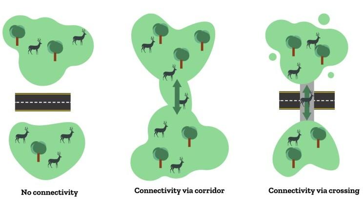 Corridors vs. Crossings