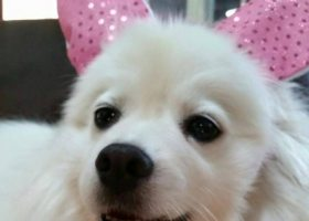 """Some contests include Best Ears, Best Tail Wagger, Best Tricks, Best Costume at the """"Dog Fair 2015"""" at Saddleback College on Thursday, April 30. (Dog Fair 2015 Facebook Page)"""