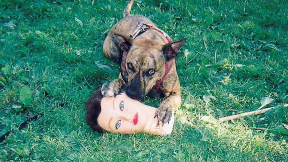 Joyce Manor's long awaited fourth album