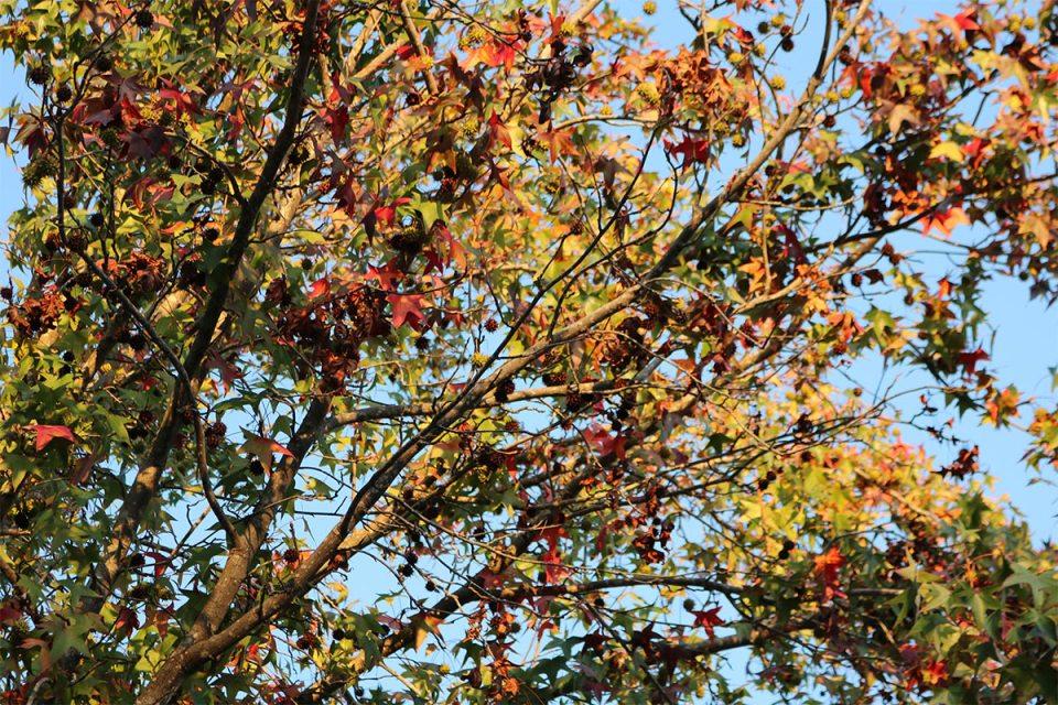 fall-web-1