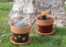 To create a DIY succulent, you need planter pots, organic potting soil and your choice of succulents. (Ashley Hern/ Lariat)