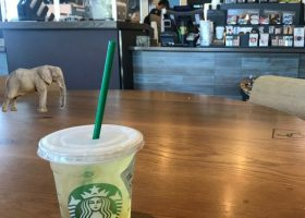 Starbucks seeking to eliminate the elephant in their coffee shops with training on May 29. (Andrea Clemett/ Lariat)
