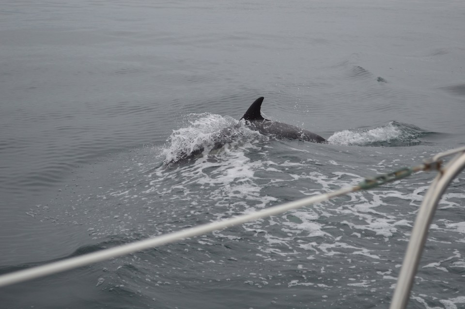 Schools of dolphins swan alongside Bonnie Seas for a look. (Andrea Clemett/Lariat)