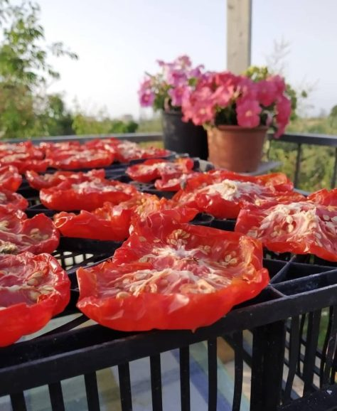fare i pomodori secchi in casa al sole