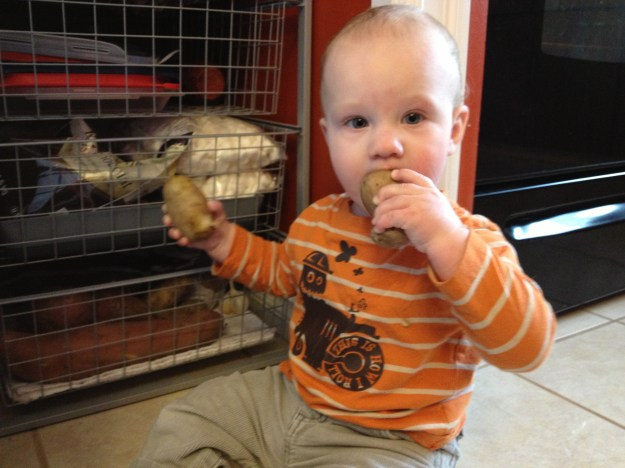 And just a little photo of Calvin to round off the post. He loves to explore and found my potatoes. Yum!