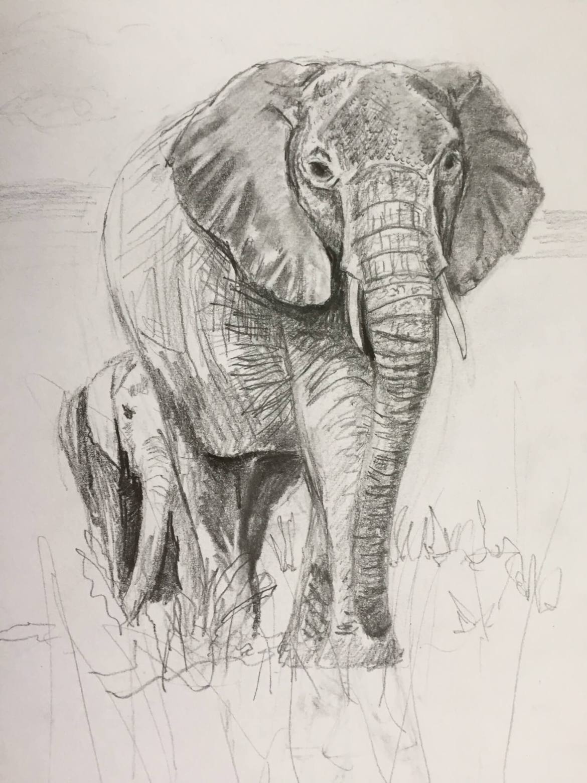 Breaking through barriers elephant magic larissa davis so i began sketching elephants a few of my first sketches are here biocorpaavc Image collections