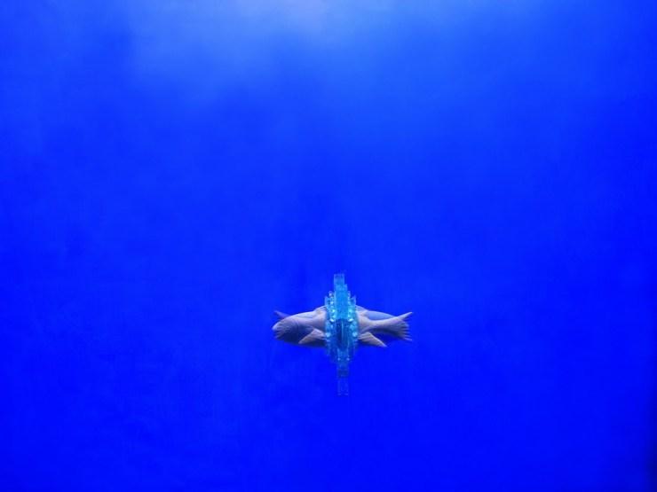 Bizhan Bassiri, Opera in Blu, 2011 (pesce)