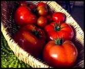 Läckra solmogna tomater från Lärjeån. Foto: Lydia Söderberg