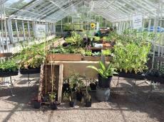 En liten del av vår plantförsäljning. Prata med vår personal om det är något speciellt du önskar. Foto: Johanne Pernklint