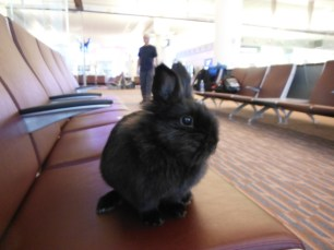 Pepper at Airport