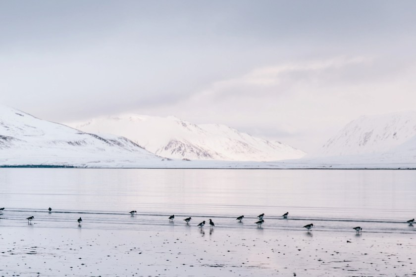iceland, water & ice