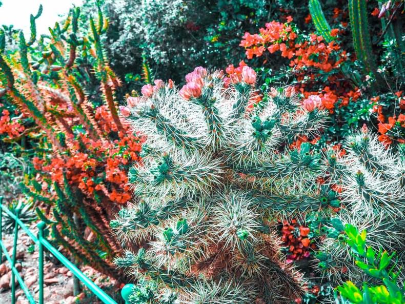 voyage à la ciotat - parc du mugel - jardin botanique