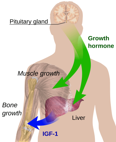 How Growth Factor Plus works