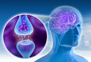 Brain Pill Helps in more neuron communication