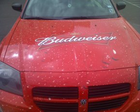 Bud Dodge Magnum: The King of beers