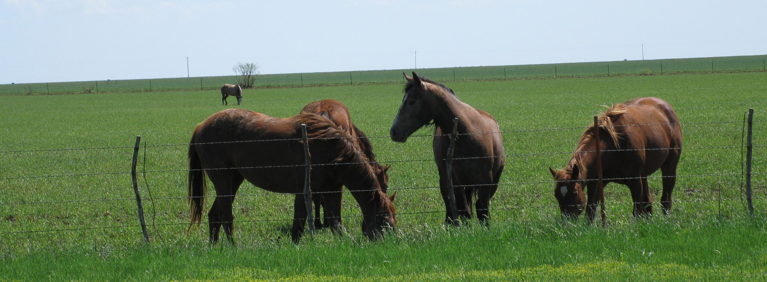 five horses in grass field