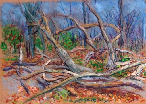 dead tree stage three