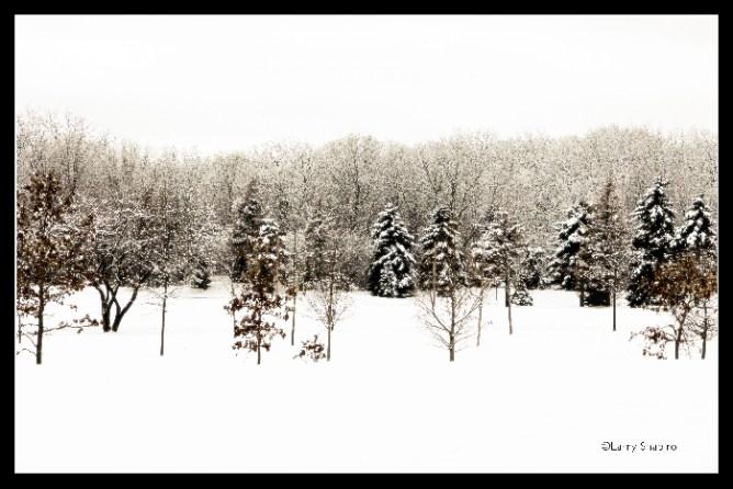 Snowy winter scene image