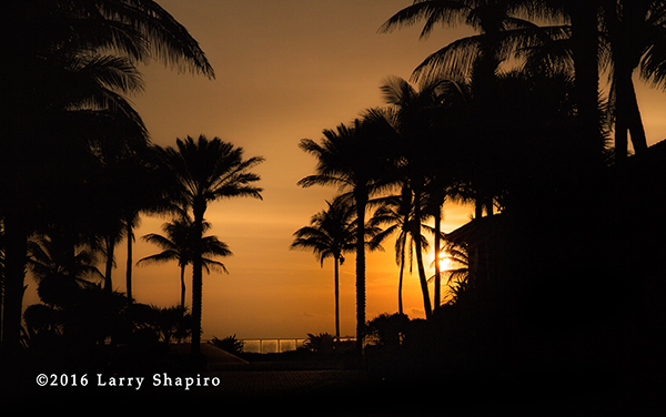 palm trees silhouetted at sunrise